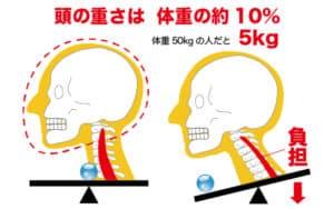 頭の重さは体重の約10%